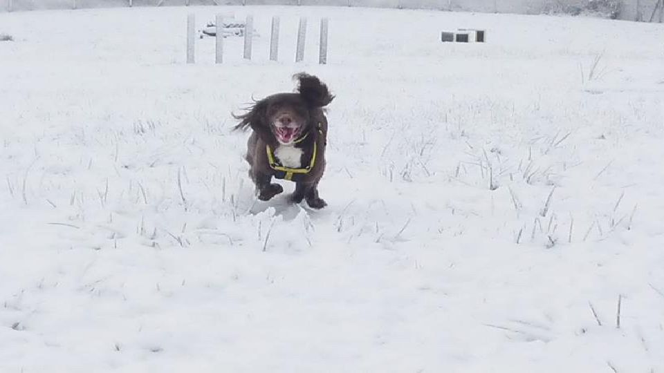 Buddy at Dogs Trust enjoys the snow. Pictured by Steven McNeilly