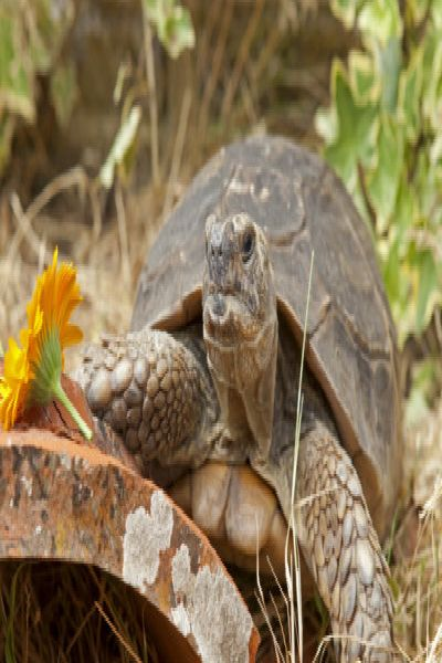 Tortoise at Raystede turns 100 SUS-180726-115206001