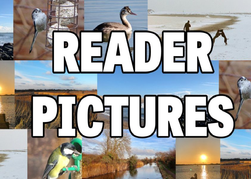 Reader pictures
