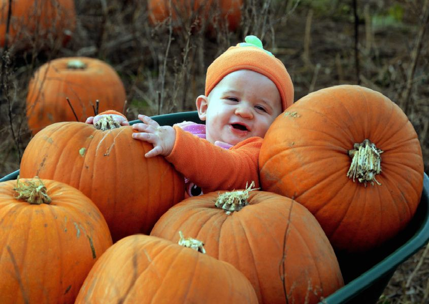 Visitors enjoy Rogate Pumpkin Patch. Photos by Kate Shemilt