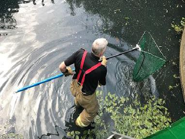 The ducklings were rescued from an overflow lake in Daventry
