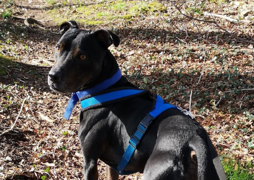Latest dogs looking for a home