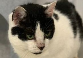 Animal charity Wadars wants to get lost cat 'Dusty' home in time for Christmas