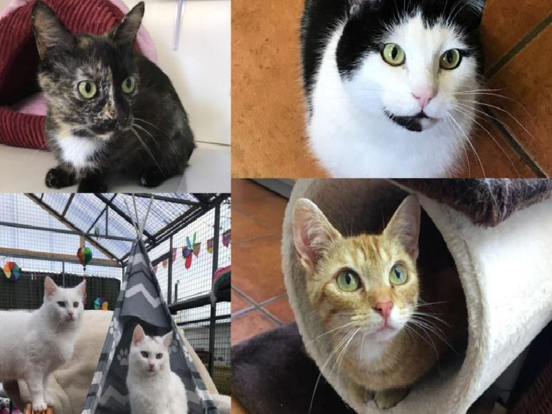 Assisi are currently looking to rehome a number of cats (Photo: Assisi)