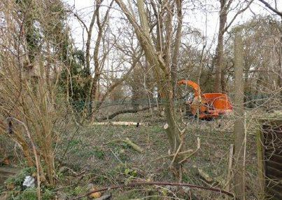 A digger clearing some trees and taking down the old fence.