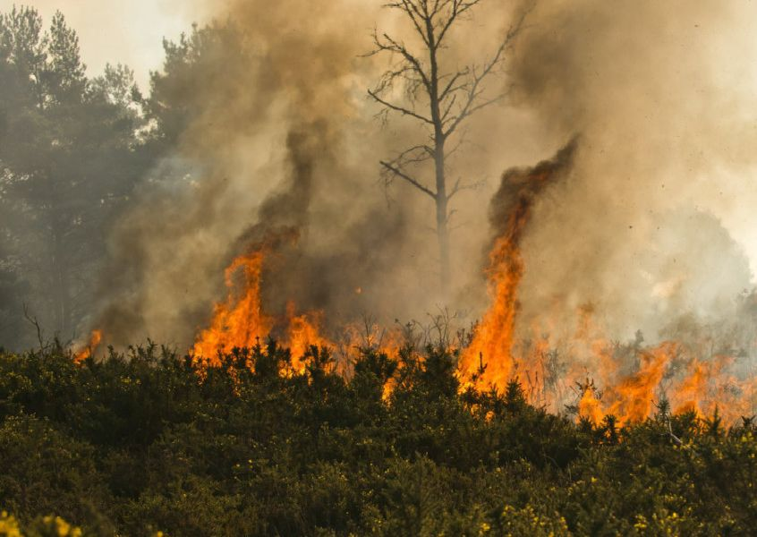 Fires at Ashdown Forest. Photo: Eddie Howland /SWNS.COM