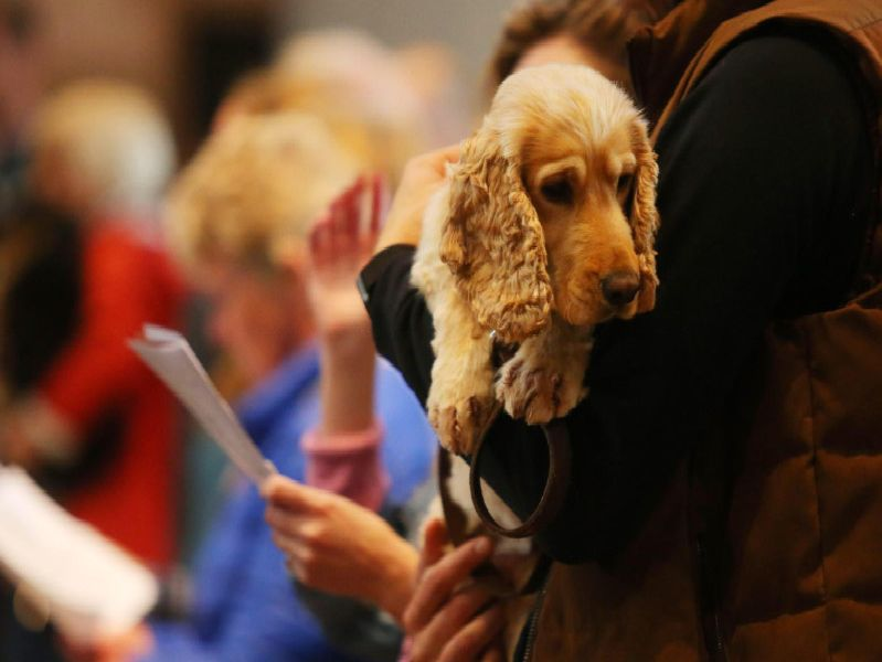Pet service at St Anne's Cathedral
