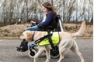 Assistance Dogs NI will be fundraising at the Abbey Centre.