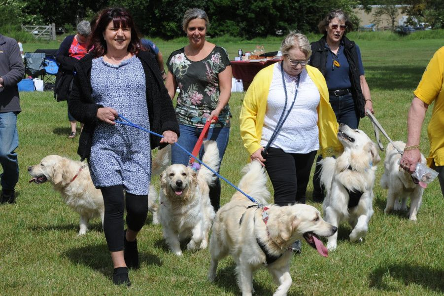 Golden retrievers all from the same breeder have a meet at Ferry Meadows. EMN-190615-170306009