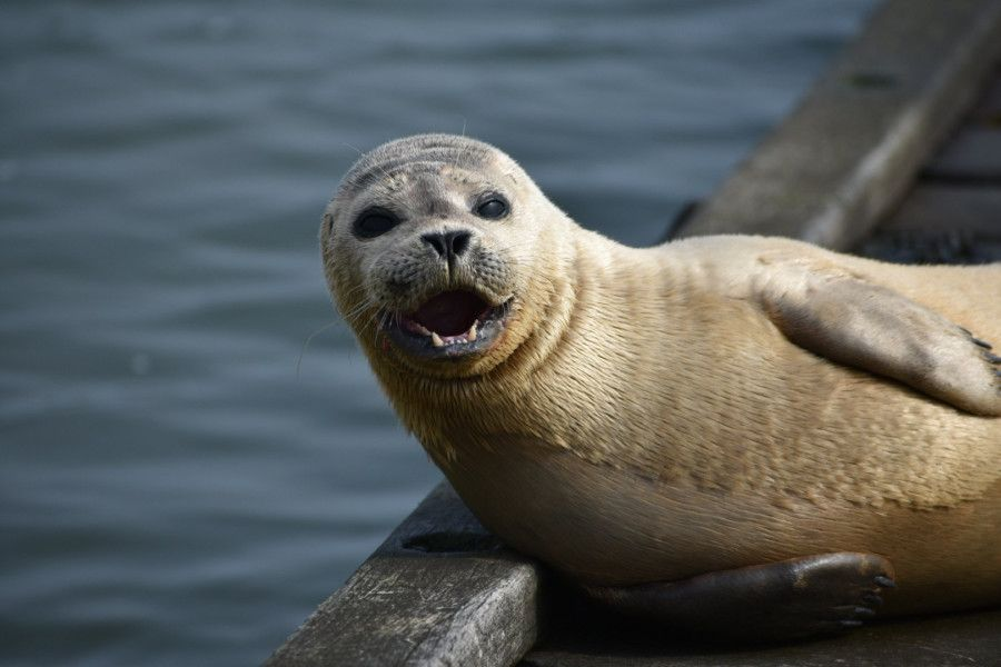 Emily Jackson, 11, snapped this seal relaxing in Shoreham