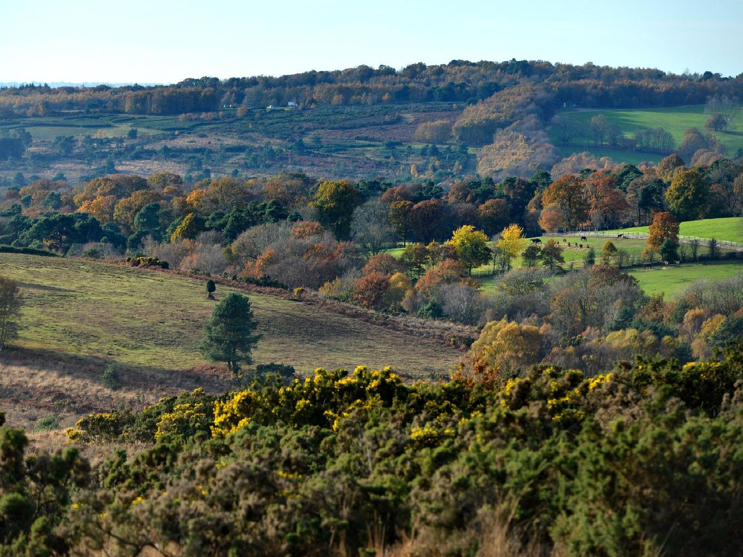 Ashdown Forest - Peter Cripps