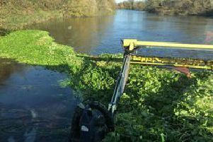 The Environment Agency has been removing floating pennywort, an invasive species, from rivers. EMN-190701-151713001