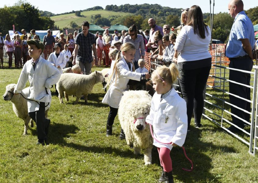 Fun in the sun at the 2019 Findon Sheep Fair