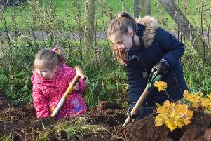 In pictures: Tree-mendous response for big plant-out at new Ahoghill park