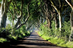 The Dark Hedges near Armoy shot to international prominence after featuring in the hit TV series Game of Thrones