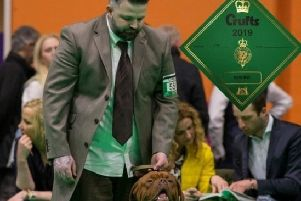 Crufts says: you are some pup, Junior!