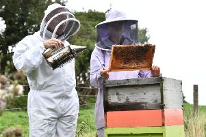 News Letter's Graeme Cousins visits beekeeper Vanessa Drew at her cottage near Dromore.' Pic Colm Lenaghan/Pacemaker