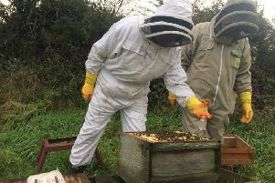 Dromore Beekeepers began by treating all bees kept at the association apiary with Api-bioxal