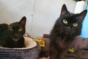 Can you help neglected cat who had to have his ear removed?