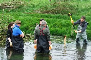 Volunteers creating new habitats in the river with 'woody debris' as part of the River Bulbourne restoration project