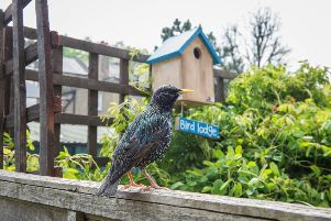 RSPB Big Birdwatch, picture by Eleanor Bentall
