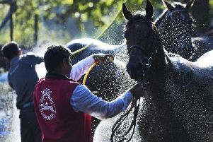 Glorious Goodwood was a scorcher in 2018 - even the horses needed a hosedown / Picture by Malcolm Wells