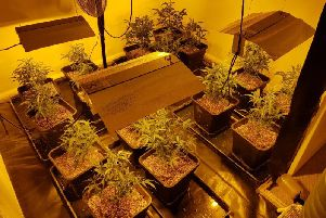 Police found 16 cannabis plants in one of the bedrooms. Picture: CPS