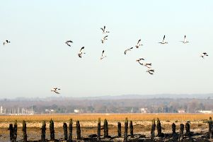 Birds flying over Chichester Harbour. Picture: Kate Shemilt C120061-3