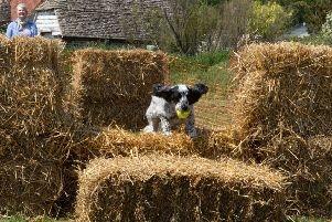 The scurry, where dogs jumped over hay bales, was great entertainment