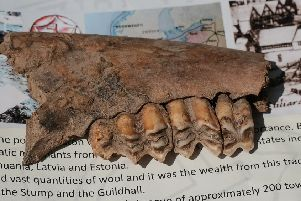 A sheep's jawbone was among the other bones unearthed during the 'big dig'.