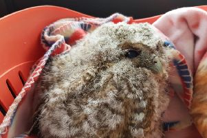 The baby tawny owl was flown from Shoreham Airport to Staverton Airport, in Gloucestershire, for specialist surgery