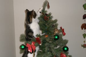 Teddy up the Christmas tree by Jerry Parsons ENGANL00120131219124145