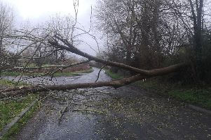 The felled tree. Pic: Katy Orme