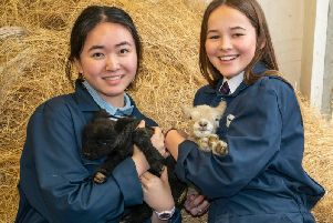 Farm prefects Leila Lai (left) holding Gruffalo and Millie Hoffman holding Sox. Photograph: Liz Finlayson/ Vervate