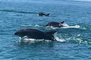 The dolphins were sighted this weekend off the coast of Shoreham. Picture: Lauren Willis
