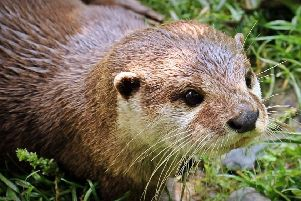 Library image of an otter