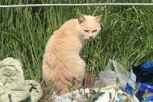 One of the feral cats found near Bicester