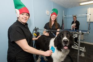 Charity day at Lawn Farm in Grendon Underwood, Pictured - Woof & Go Dog Grooming owner Becky Shute and groomer Donna Pelling with Bertie a Bucovina Shepherd, and at back is Sarah Shute with Karlos the Chicuahua PNL-190212-221146009
