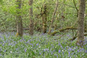 Decoypond Wood, Buckinghamshire (Credit: Woodland Trust)