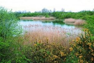 The Calvert Jubilee site - host to a rare selection of animals
