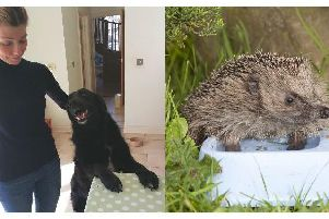 Millie and the hedgehog