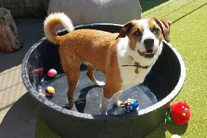 Jasper cools down in the paddling pool. Photo: Shoreham Dogs Trust