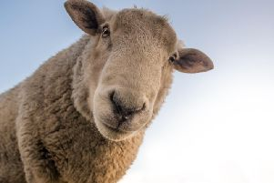 A dead sheep''In the last year Southern Water removed 1,569 tonnes (eq weight more than 6276 toilets) from Sussex sewers alone.