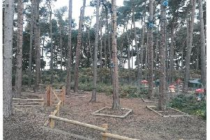 The tree climbing activity at Center Parcs