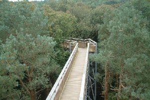 The tree top walk in Salcey Forest. Picture by Lucy Angus
