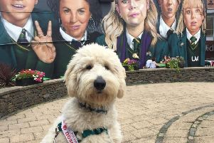 Derry dog Gatsby aims to become the 'Nose of Tralee'