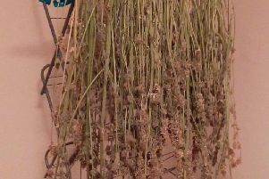 The herbal cannabis was discovered drying on a clothes horse upstairs.