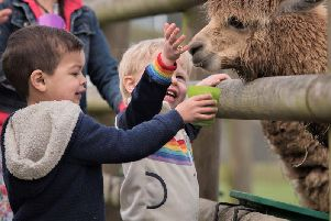 Animal magic over half term at Woburn Safari Park