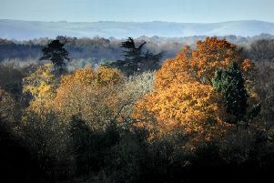 Autumn colours in Sussex