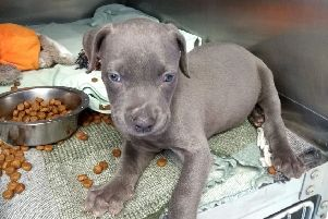 Puppy Mia who was found in July 2018 during one of the hottest weeks on record, said the RSPCA